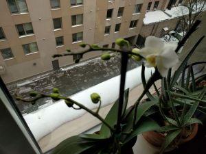roger-bultot-flower